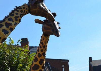 fdw16-sa-girafes-00011